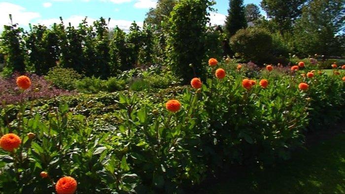 fab284a0c82 Külmahellade ehk üheaastaste lillejuurikate uudised meilt ja mujalt  (Aiasaade 17.05.2014)